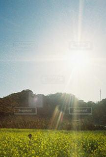 野原の上に虹をの写真・画像素材[3033062]