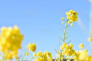 黄色い花の写真・画像素材[3033063]