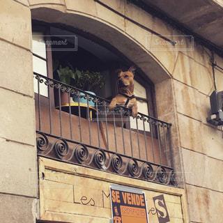 犬の写真・画像素材[1097059]