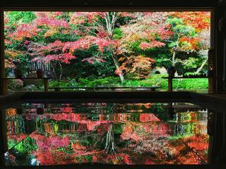 九州の逆さ紅葉の写真・画像素材[1432130]