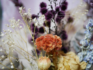 花のアップの写真・画像素材[1514957]