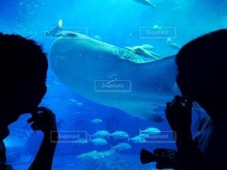 ジンベイザメと3ショットの写真・画像素材[3535257]