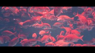 魚の写真・画像素材[1185299]