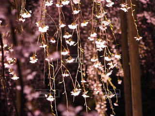 花の写真・画像素材[1093221]