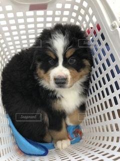 犬の写真・画像素材[2760803]