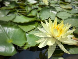 花の写真・画像素材[1093931]