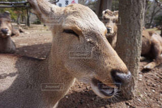 動物の写真・画像素材[1094425]