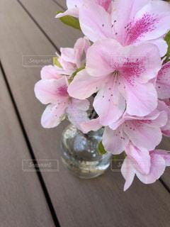 ピンク色の色鮮やかなツツジ①の写真・画像素材[1155579]