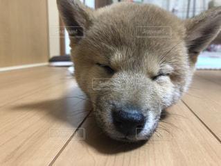 犬の写真・画像素材[1095206]