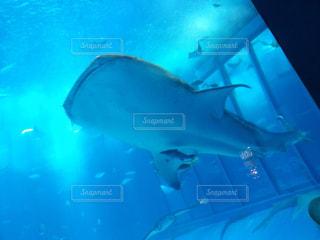 水面下を泳ぐ魚たちの写真・画像素材[1101695]