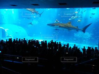 沖縄美ら海水族館とバック グラウンドでの大画面の前に飛んでいる鳥の群れの写真・画像素材[1101696]