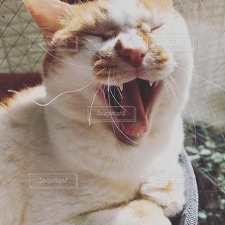 猫の写真・画像素材[1948040]