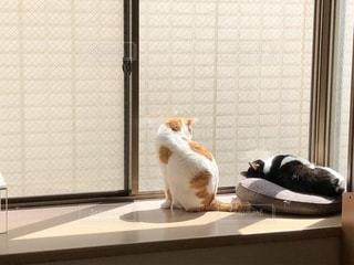 猫の写真・画像素材[1948116]