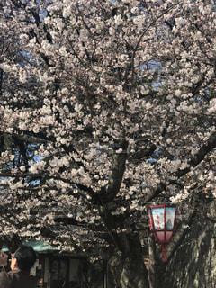 名古屋城の桜 - No.1095521