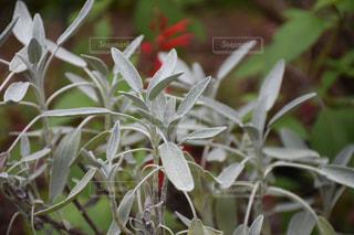 秋の植物の写真・画像素材[1602900]