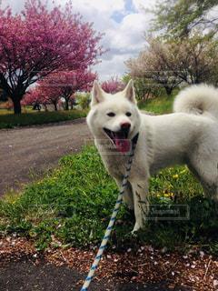 犬の写真・画像素材[1097102]