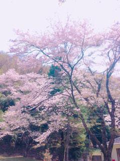 春の写真・画像素材[1097316]