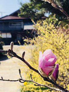 春の気配の写真・画像素材[1099713]