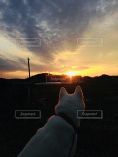 日没の前に立っている人の写真・画像素材[1116126]