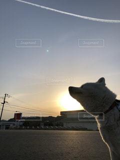 飛行機雲と夕日と犬の写真・画像素材[1120627]