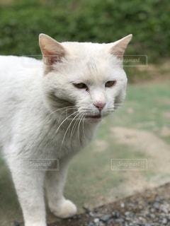 猫をクローズアップするの写真・画像素材[2811935]