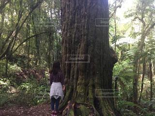 巨木の前でたたずむ女性の写真・画像素材[1096857]