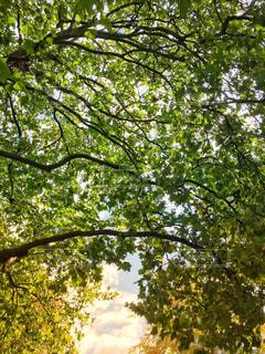 木漏れ日から覗く空の写真・画像素材[1098467]
