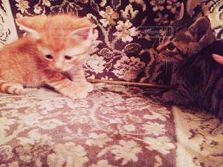 子猫の写真・画像素材[1103046]