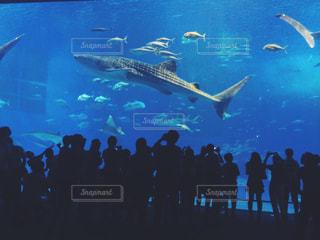 美ら海水族館の写真・画像素材[1104866]