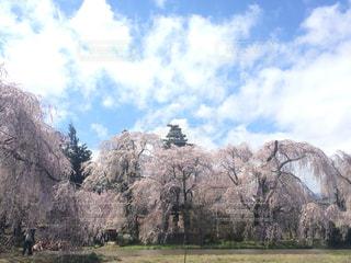 春の写真・画像素材[1097364]