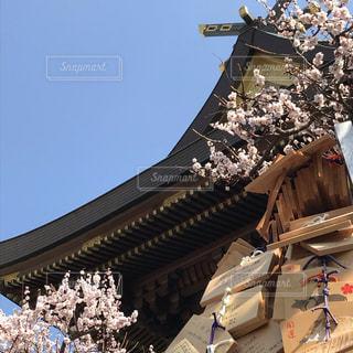 春の写真・画像素材[2784327]