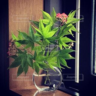 テーブルの上に花の花瓶の写真・画像素材[3250371]