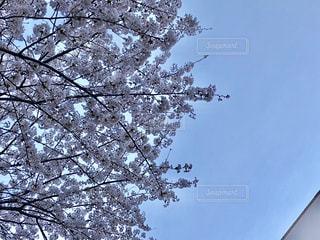 春の写真・画像素材[1097406]