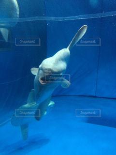 水族館の写真・画像素材[1097417]