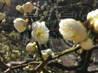 花の写真・画像素材[1097639]