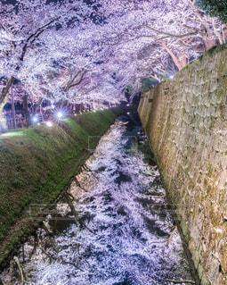 鏡桜の写真・画像素材[1118399]
