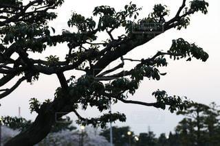 木の枝に止まっている鳥たちの群れの写真・画像素材[1100198]