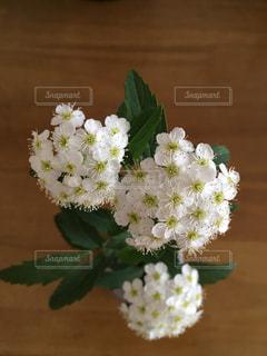 白い花のアップの写真・画像素材[1139123]