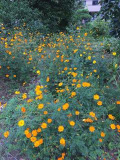野に咲く花の写真・画像素材[1572965]