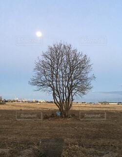 1本の木の写真・画像素材[4128054]