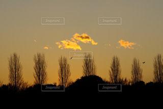夕日と木立の写真・画像素材[1099419]