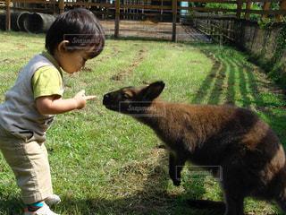 小さな子供とカンガルーの写真・画像素材[1109497]