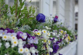 紫の花の写真・画像素材[1116693]