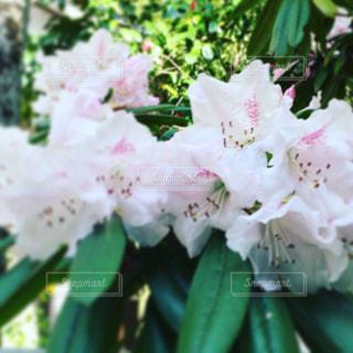 春爛漫の花盛りの写真・画像素材[1127445]