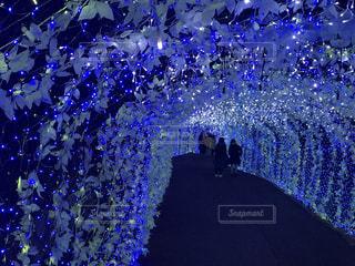 光のトンネルの写真・画像素材[1098533]