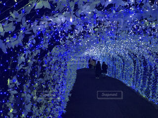 光のトンネルの写真・画像素材[1098537]