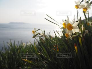 水と黄色い花で一杯の斜面の写真・画像素材[1099681]