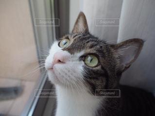 窓の前に座っている猫の写真・画像素材[1099747]