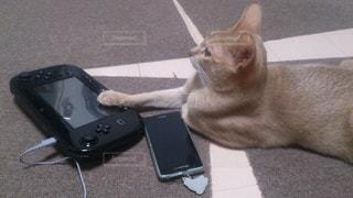 ゲームをする猫の写真・画像素材[1100049]