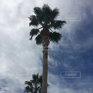 ヤシの木の前に雲のグループの写真・画像素材[1100252]